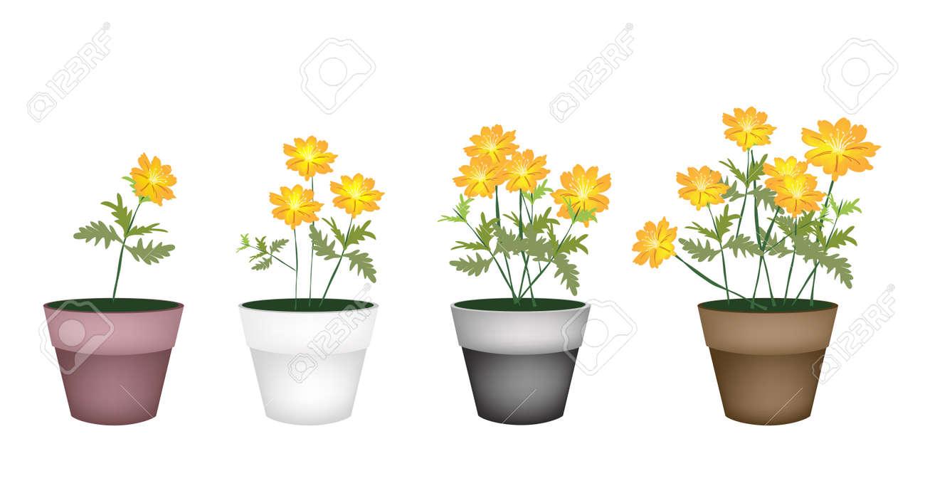 Blumen Und Pflanzen, Illustration Gelb Kosmos Blumen In Vier Blumentöpfe  Für Garten Dekoration