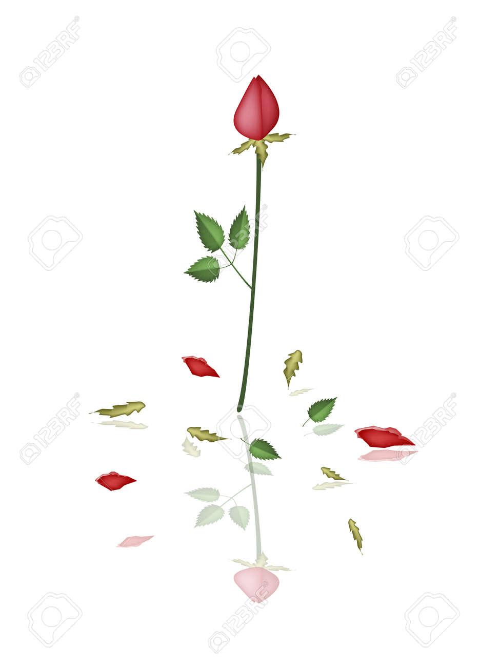 A symbol of love illustration of a beautiful red roses for a symbol of love illustration of a beautiful red roses for someone special in valentine buycottarizona