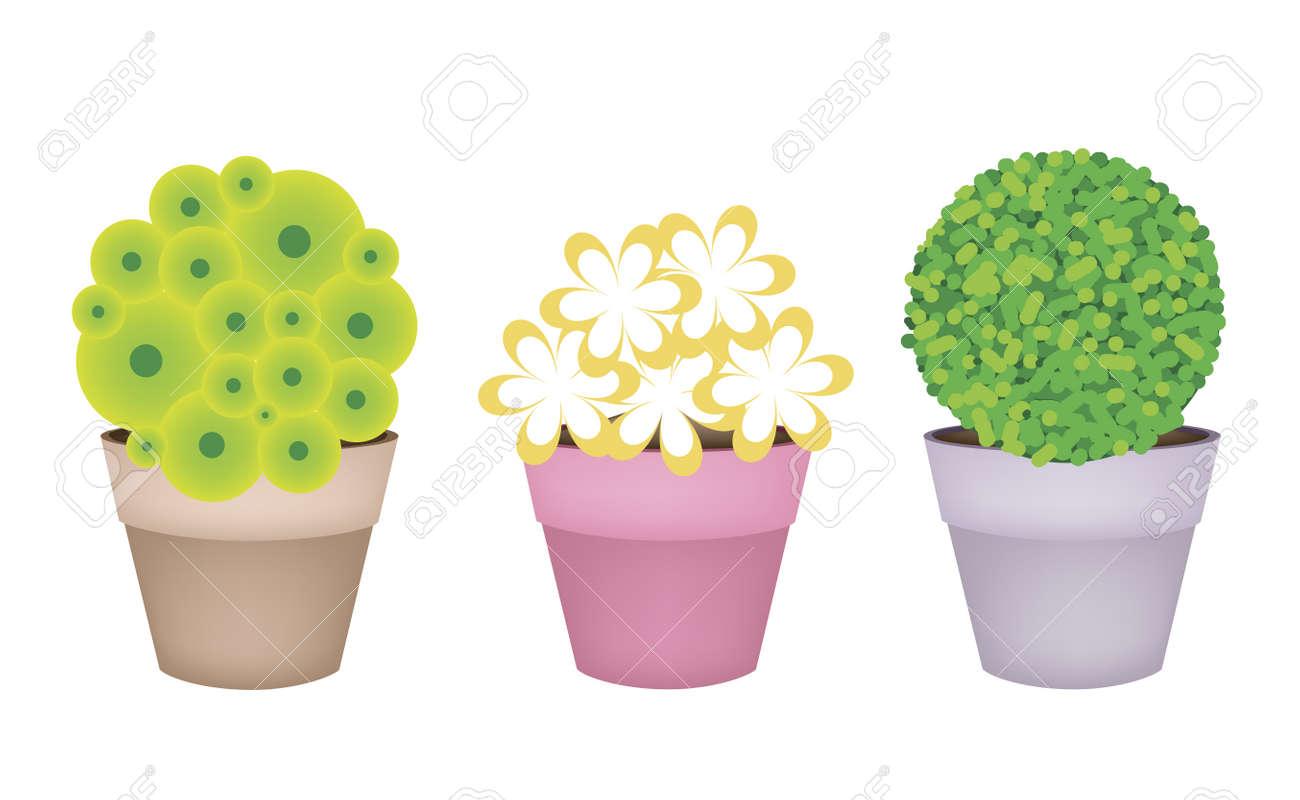 Foto Di Piante Sempreverdi pianta, illustrazione raccolta di isometrica alberi e piante, varietà di  piante, sempreverdi e alberi per la decorazione del giardino.