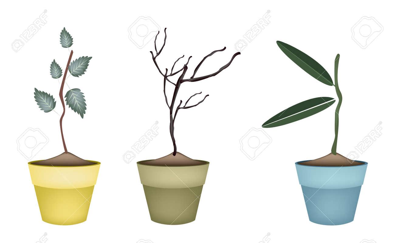 Immagini Di Piante E Alberi concetto ecologico, verde e alberi secchi e piante, varietà di piante,  sempreverdi e alberi per la decorazione del giardino.