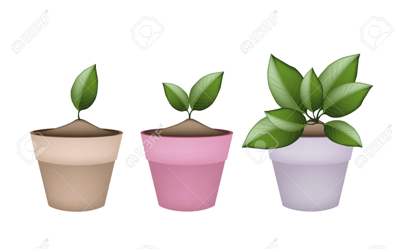 Houseplant Illustration Of Green Trees And Plants In Ceramic