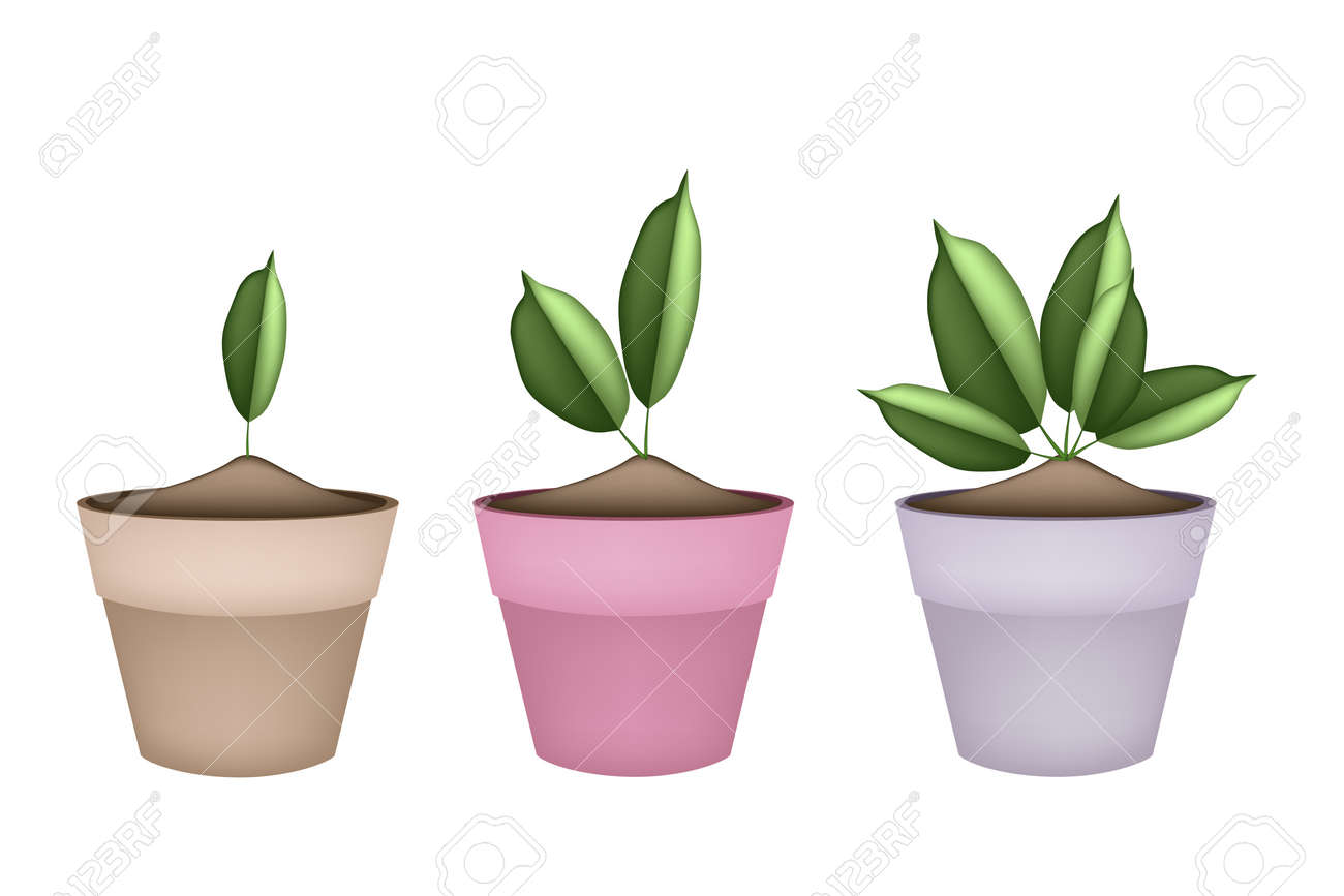 houseplant of green trees and plants in ceramic flower pots or terracotta plant pots