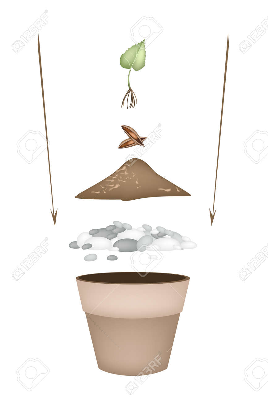 pasos plantacin de rboles ilustracin de macetas de cermica con tierra para macetas