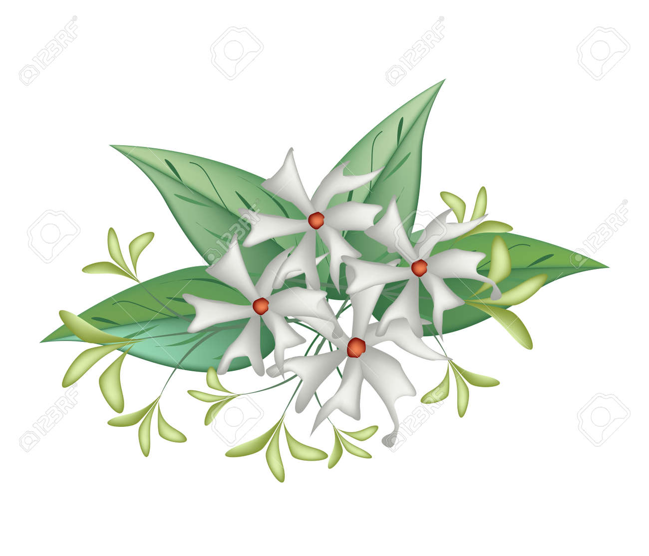 Beautiful Flower Bunch Of White Tuberose Flowers Or Night Blooming Royalty Free Cliparts Vectors And Stock Illustration Image 44900785