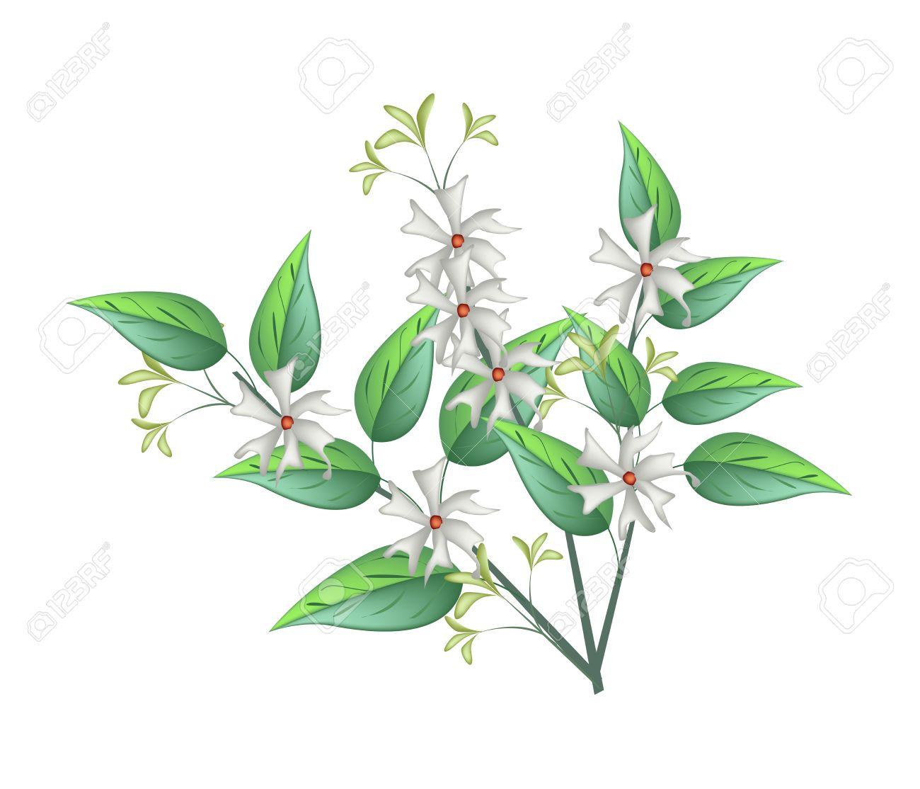 Beautiful Flower Bunch Of White Tuberose Flowers Or Night Blooming