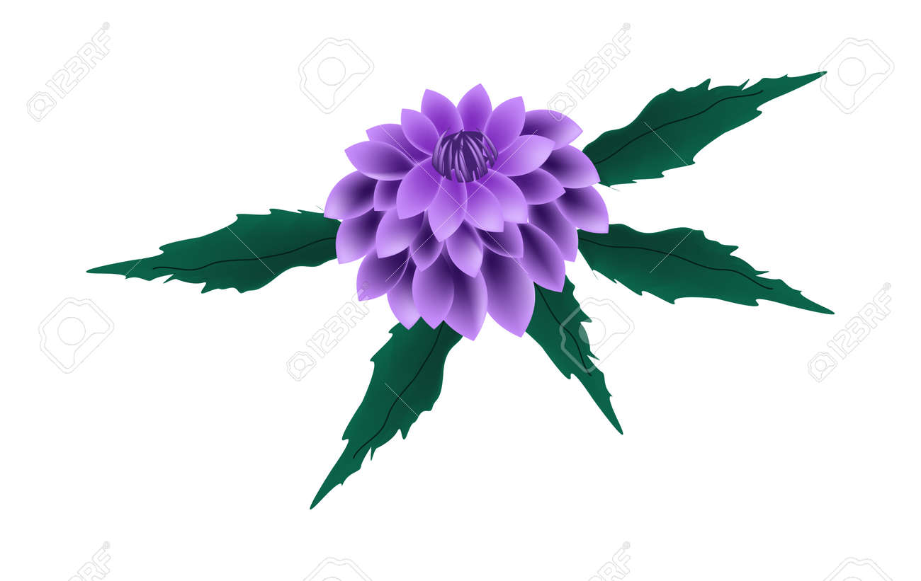 Beautiful flower illustration of bright and beautiful purple beautiful flower illustration of bright and beautiful purple dahlia flower with green leaves isolated on izmirmasajfo
