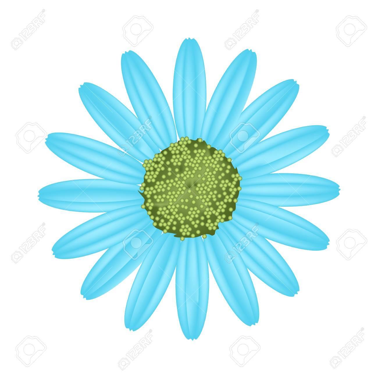 Symbol Of Love Bright And Light Blue Osteospermum Daisy Flower