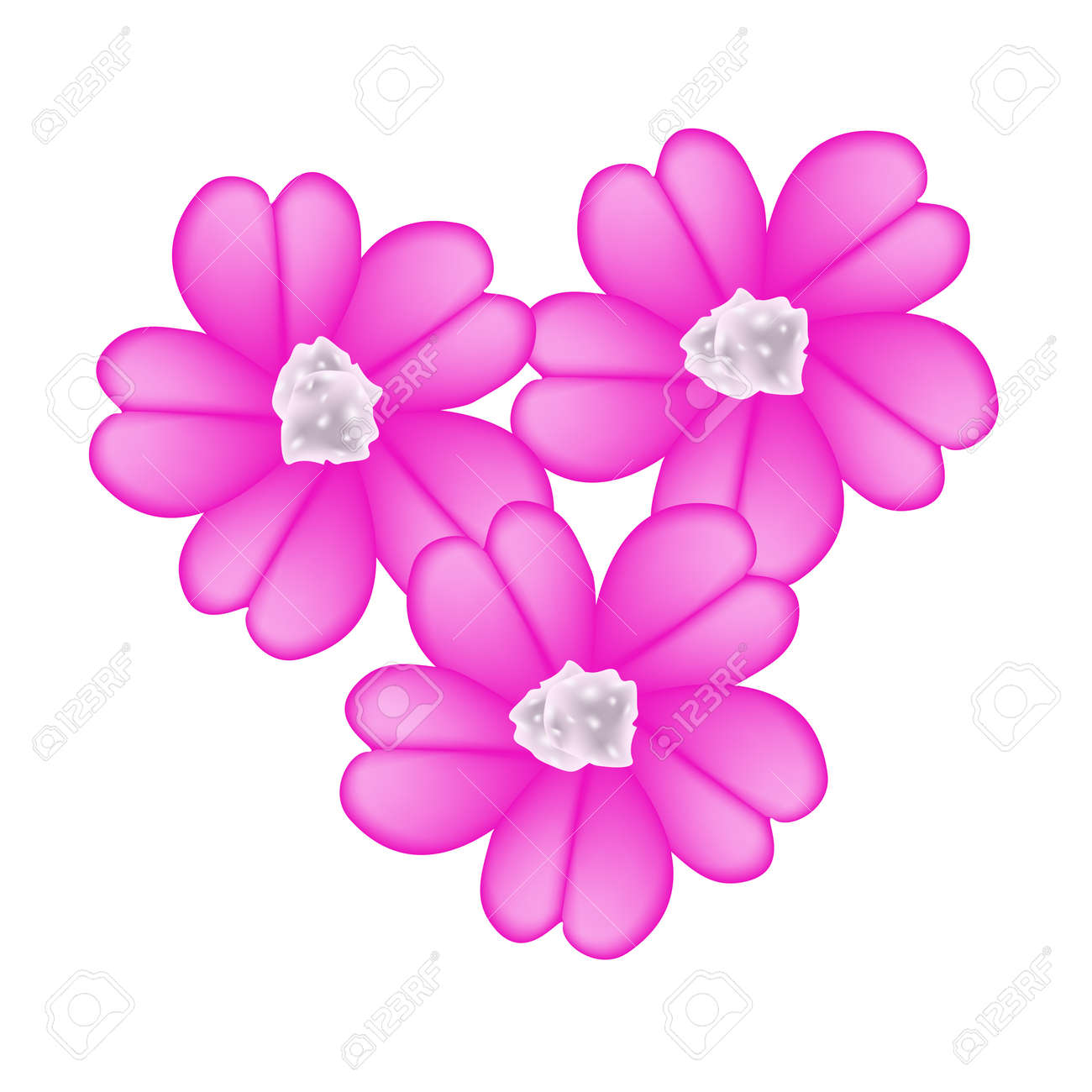 Beautiful flower illustration of pink yarrow flowers or achillea beautiful flower illustration of pink yarrow flowers or achillea millefolium flowers isolated on white background mightylinksfo