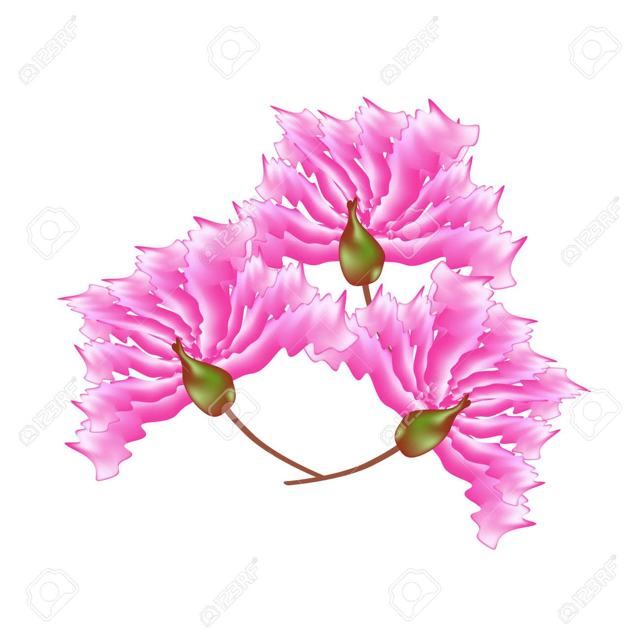 Beautiful flower illustration pink crape myrtle flowers or beautiful flower illustration pink crape myrtle flowers or lagerstroemia indica flowers isolated on white background mightylinksfo