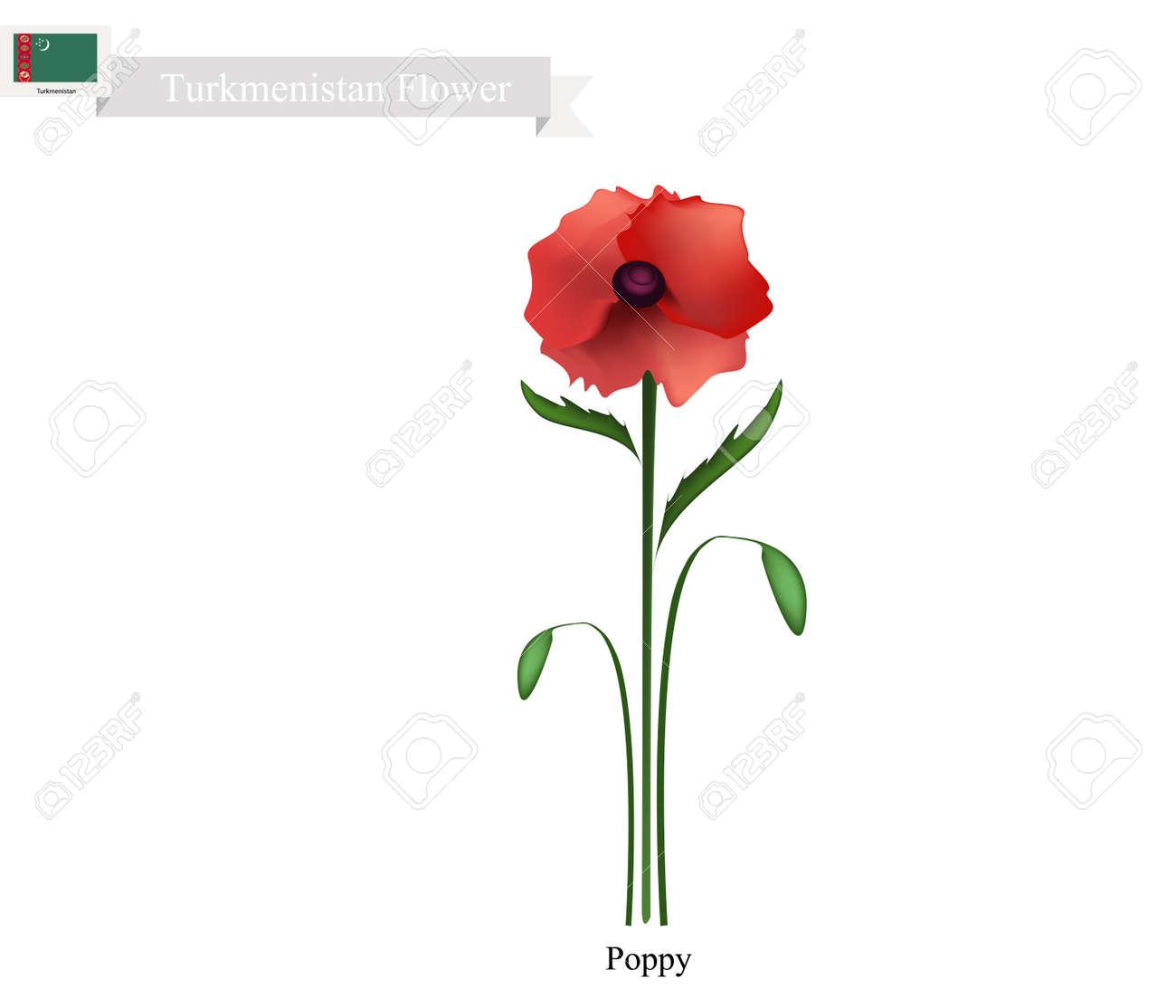 Turkmenistan flower illustration of red poppy flower one of turkmenistan flower illustration of red poppy flower one of the most popular flower in mightylinksfo