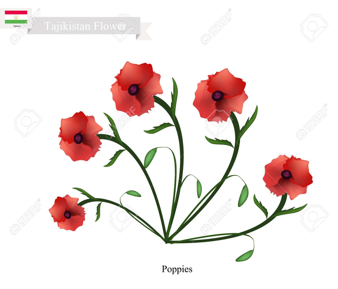 Tajikistan Flower Illustration Of Red Poppy Flowers One Of