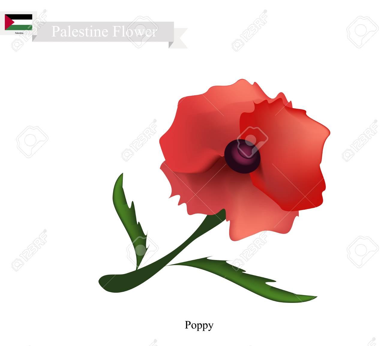 Palestine flower illustration of red poppy flowers one of the palestine flower illustration of red poppy flowers one of the most popular flower in mightylinksfo