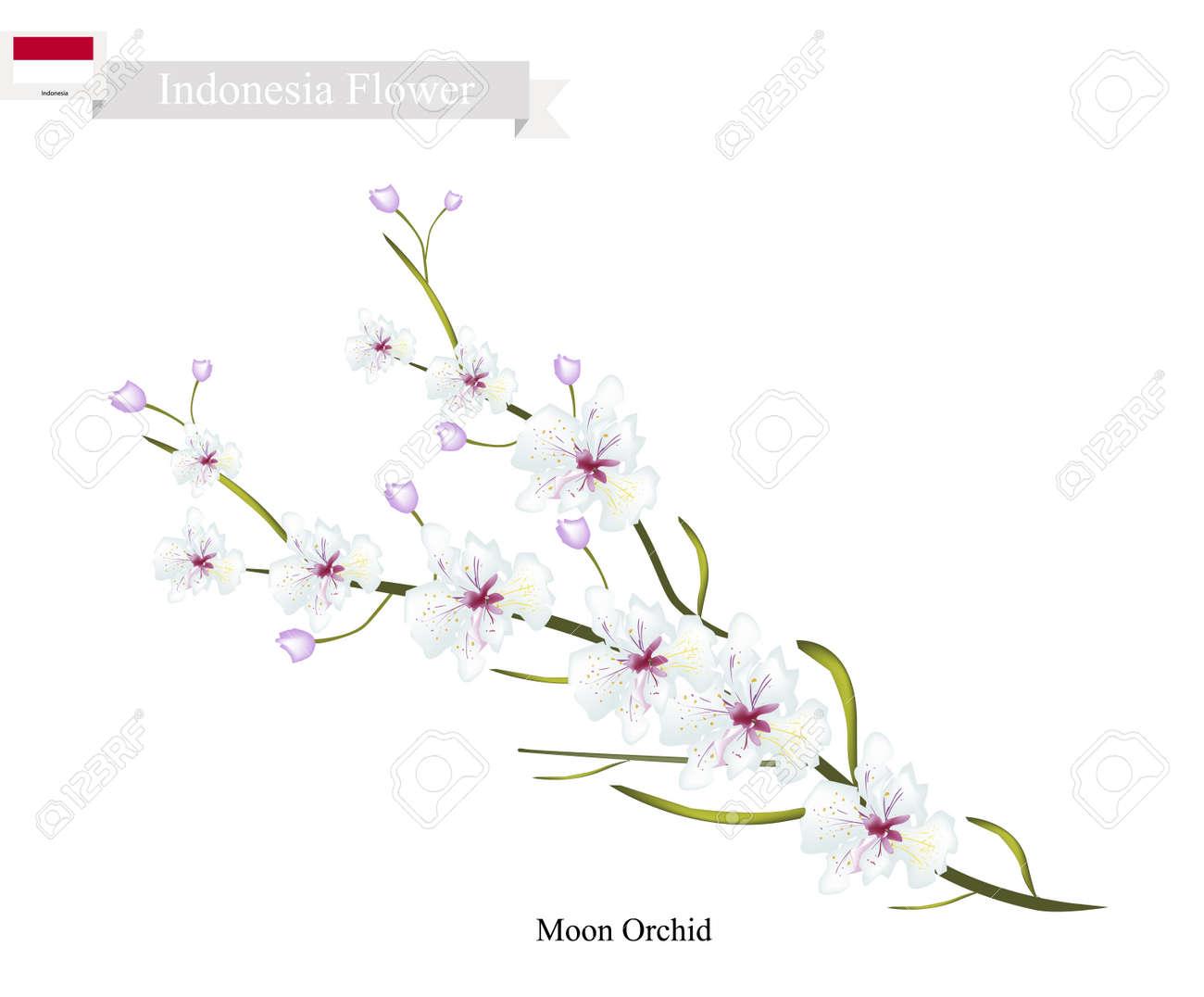 インドネシアの花、月の蘭の花のイラスト。インドネシアの魅力の花。