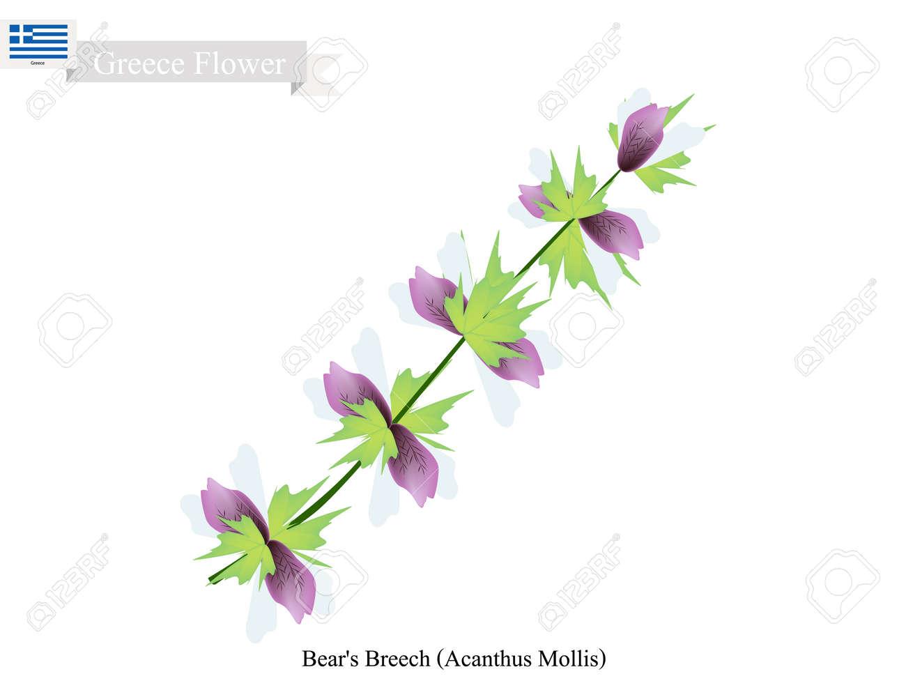 Greece Flower Illustration Of Bears Breech Or Acanthus Mollis
