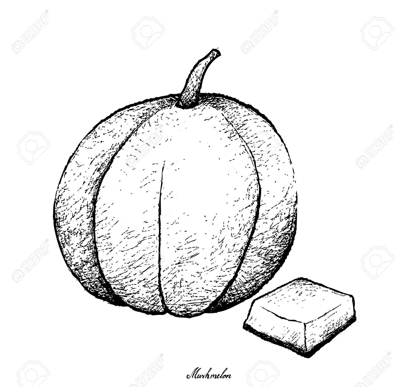 Fresh Fruit Illustration Hand Drawn Sketch Of Muskmelon Cantaloupe Royalty Free Cliparts Vectors And Stock Illustration Image 94404341 Find & download free graphic resources for cantaloupe. 123rf com