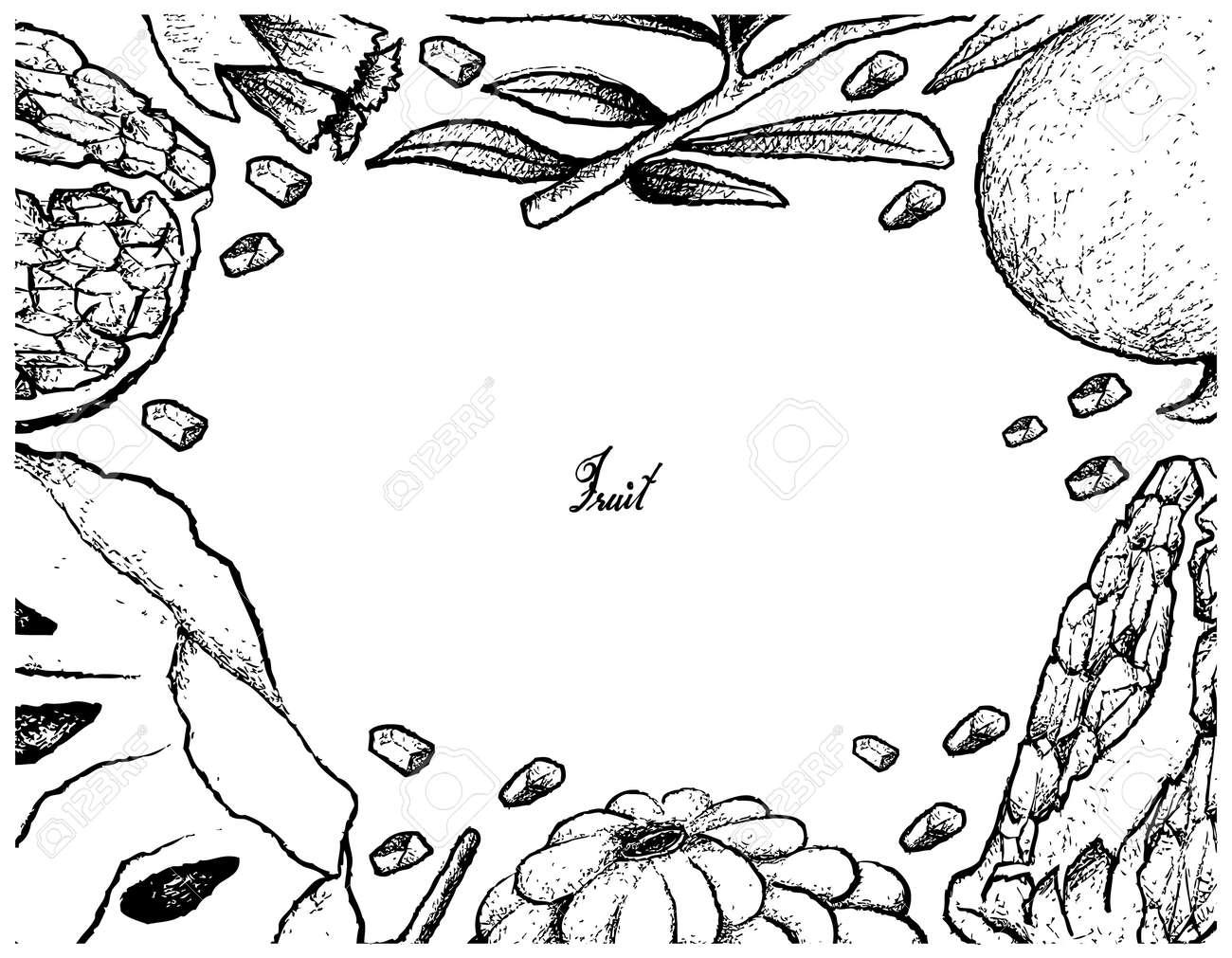 Tropical Fruit, Illustration Hand Drawn Sketch Frame Of Custard ... for Custard Apple Clipart Black And White  35fsj