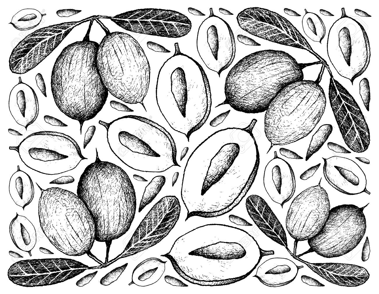 トロピカルフルーツ イラスト壁紙の背景の手描きスケッチ新鮮なカランダやカリッサカランダスフルーツ のイラスト素材 ベクタ Image