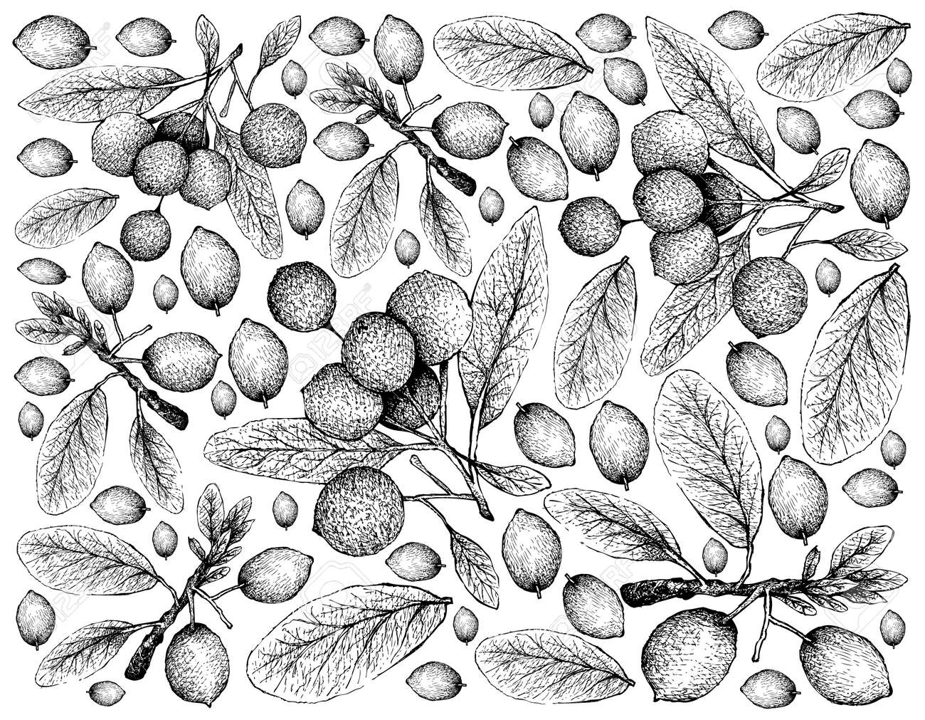 Tropical Fruit Illustration Wallpaper Of Hand Drawn Sketch Imbe