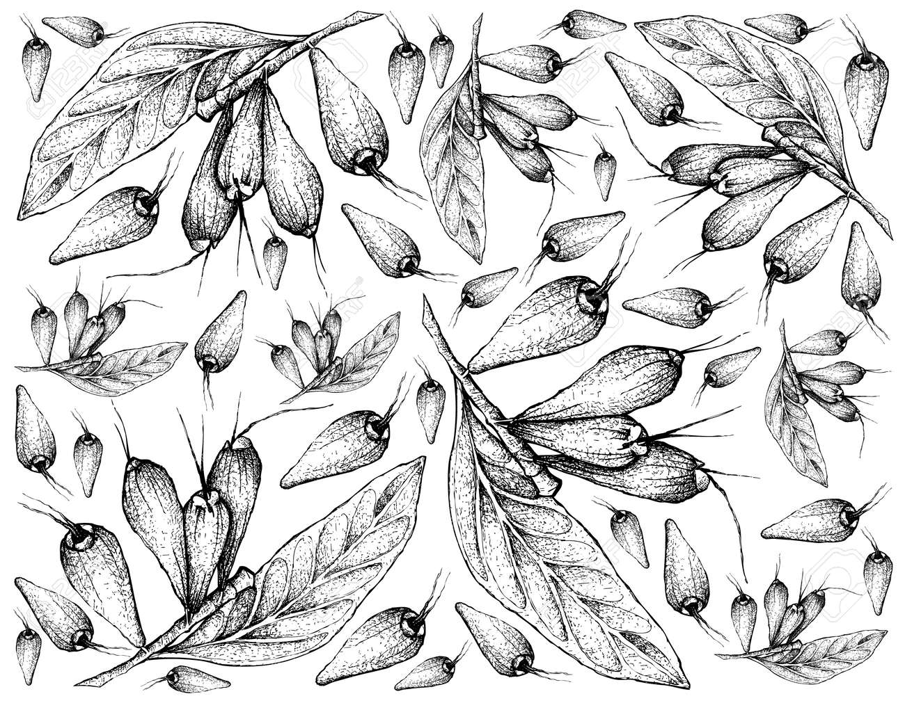 Tropical Fruits Illustration Wallpaper Of Hand Drawn Sketch Stock Photo Picture And Royalty Free Image Image 119631448