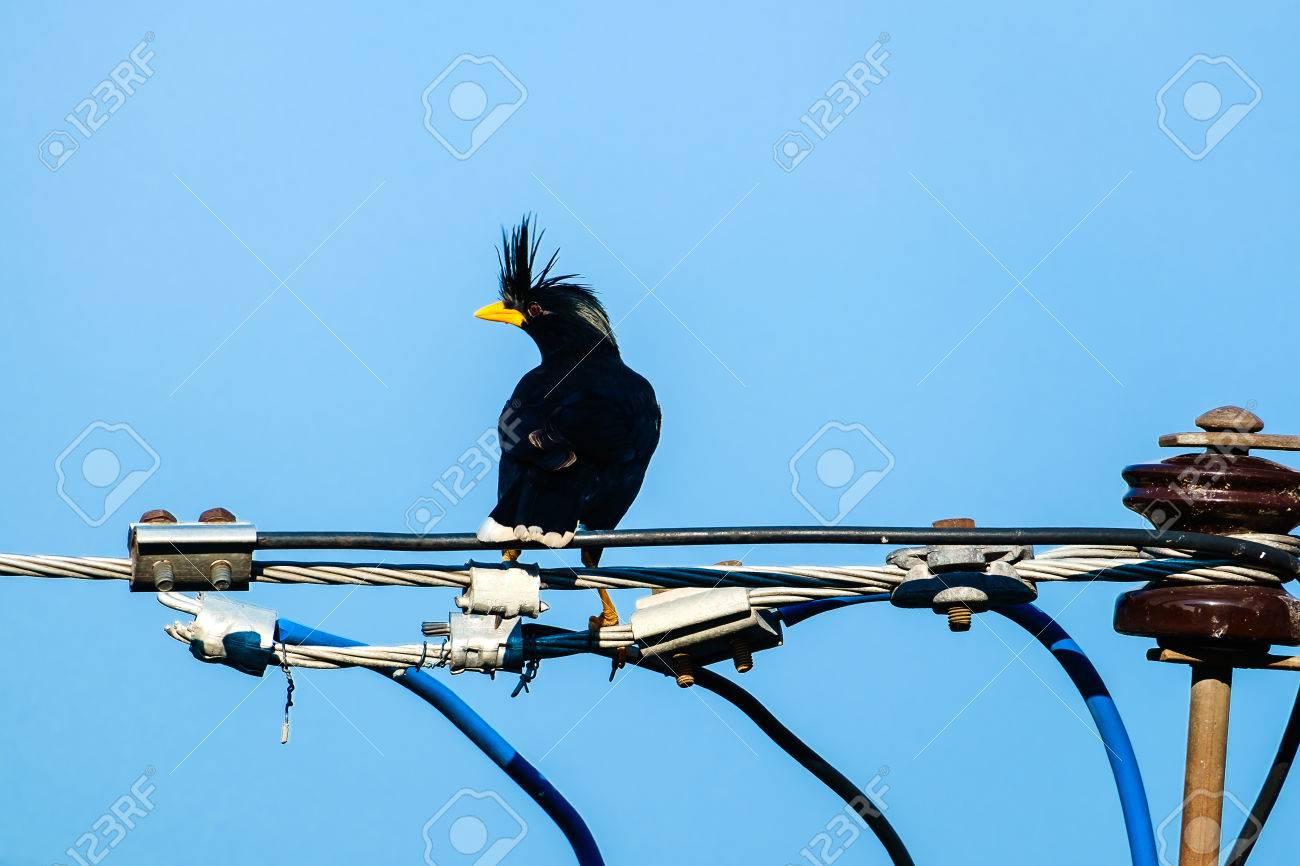 Ziemlich Kundendienst Blauer Vogel Ideen - Die Besten Elektrischen ...