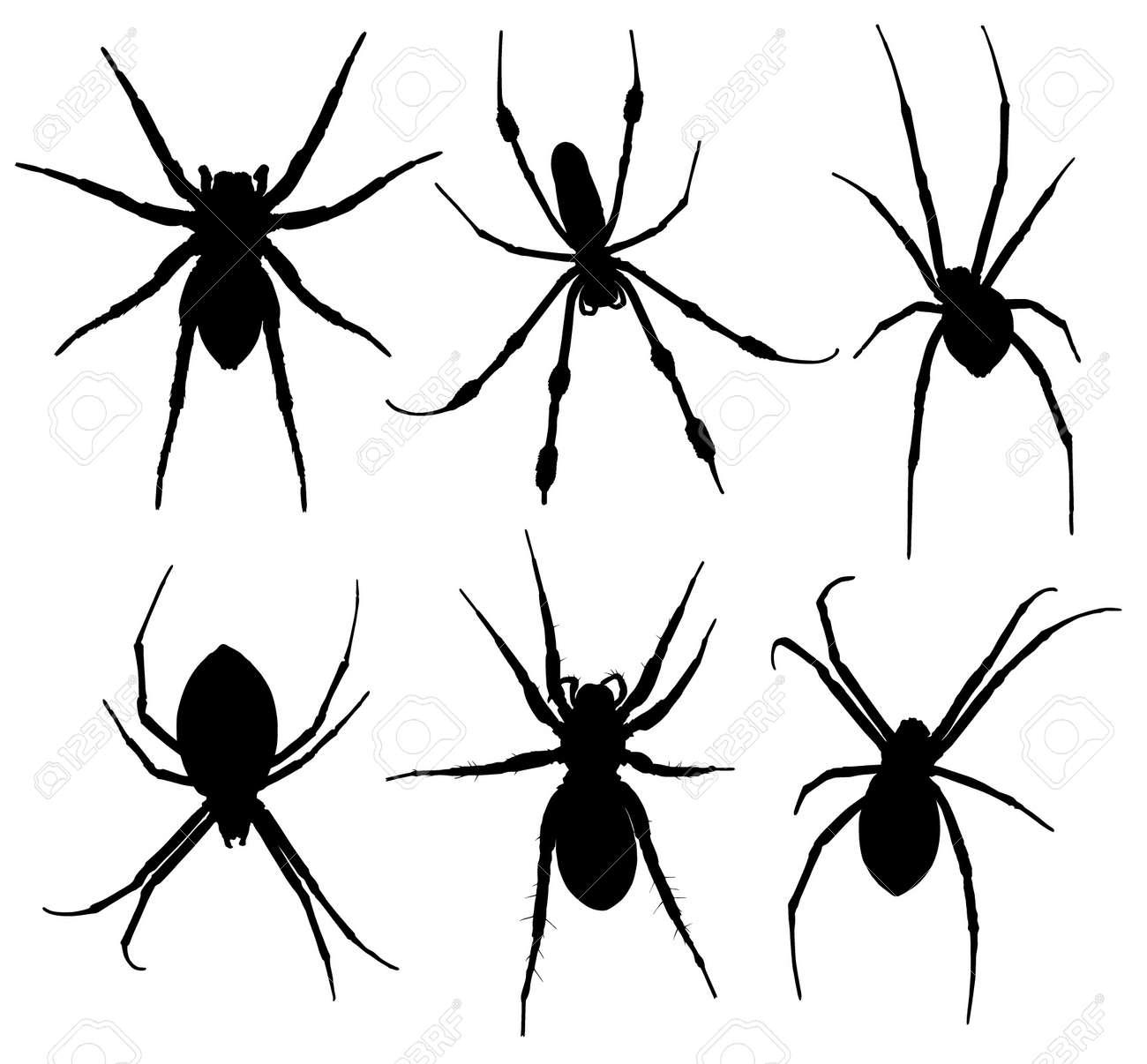 Silhouette D'araignée Sur Fond Blanc Clip Art Libres De Droits , Vecteurs Et Illustration. Image 15682562.