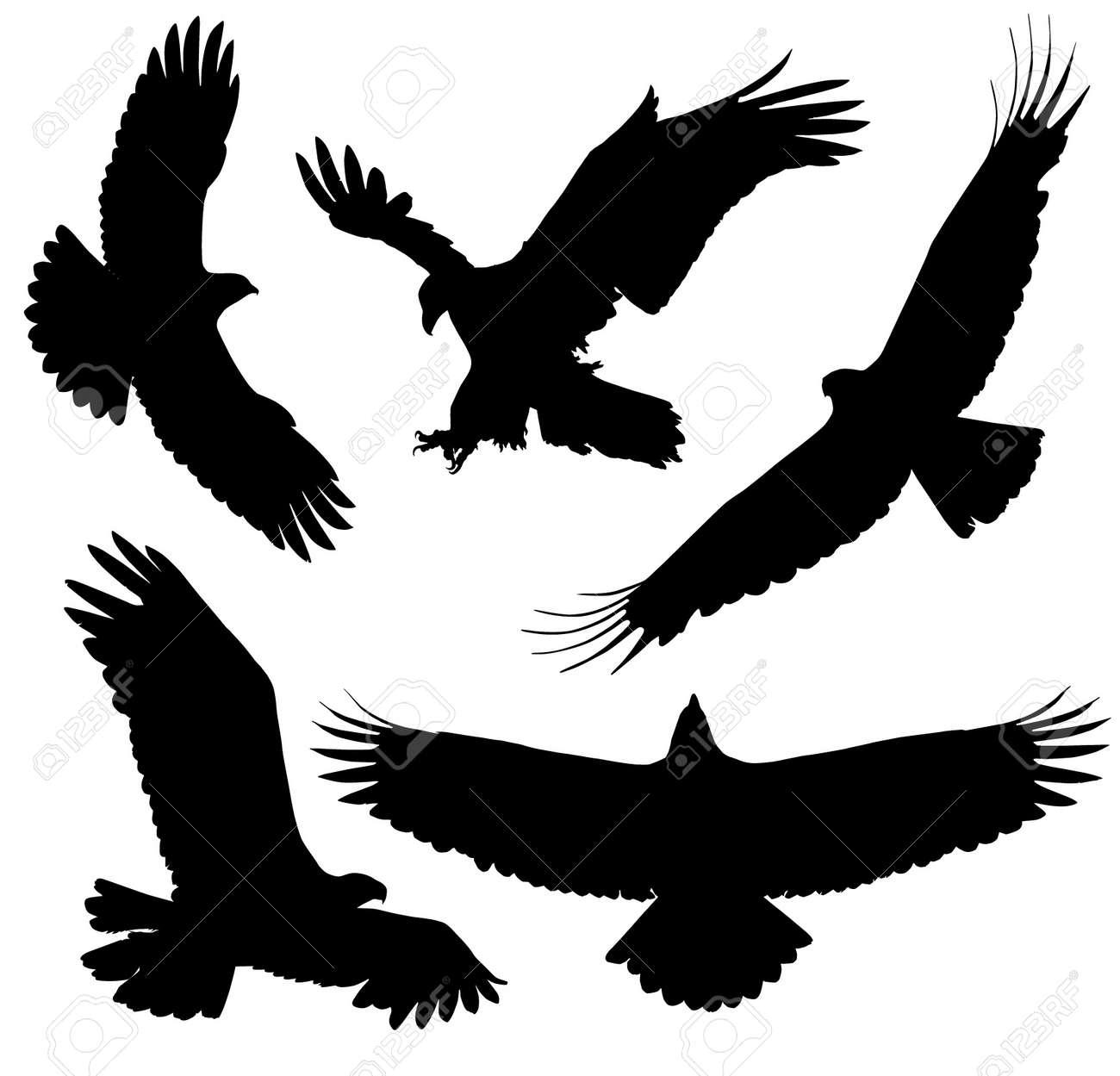 eagle wings  Eagle Silhouette  Eagle Wing Silhouette