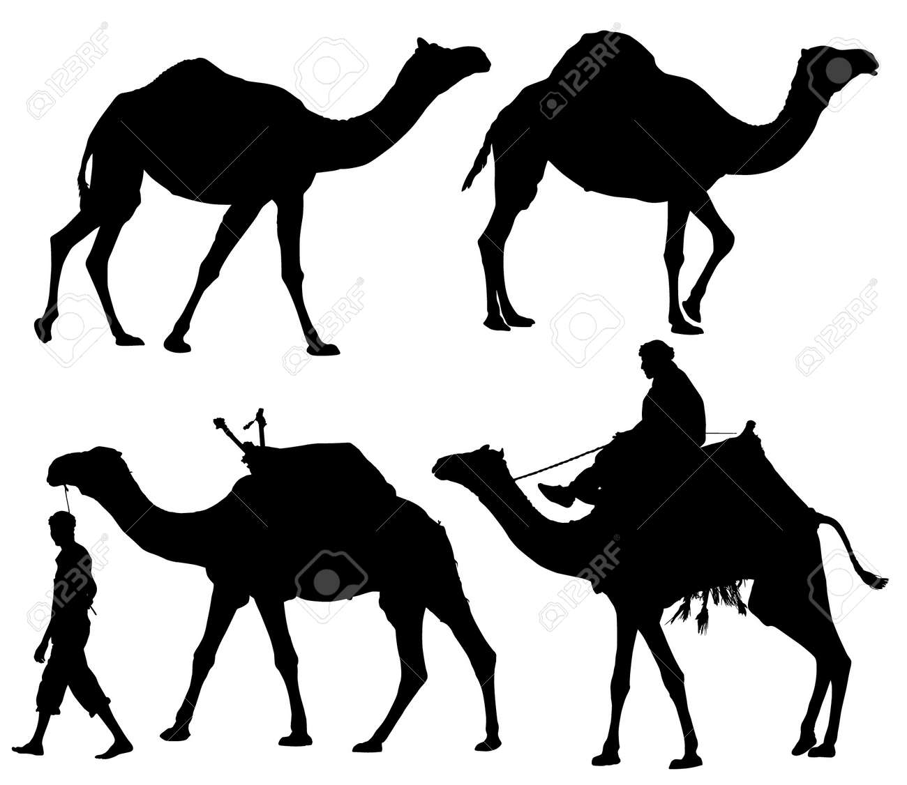 Camel Silhouette on white background Stock Vector - 16221346