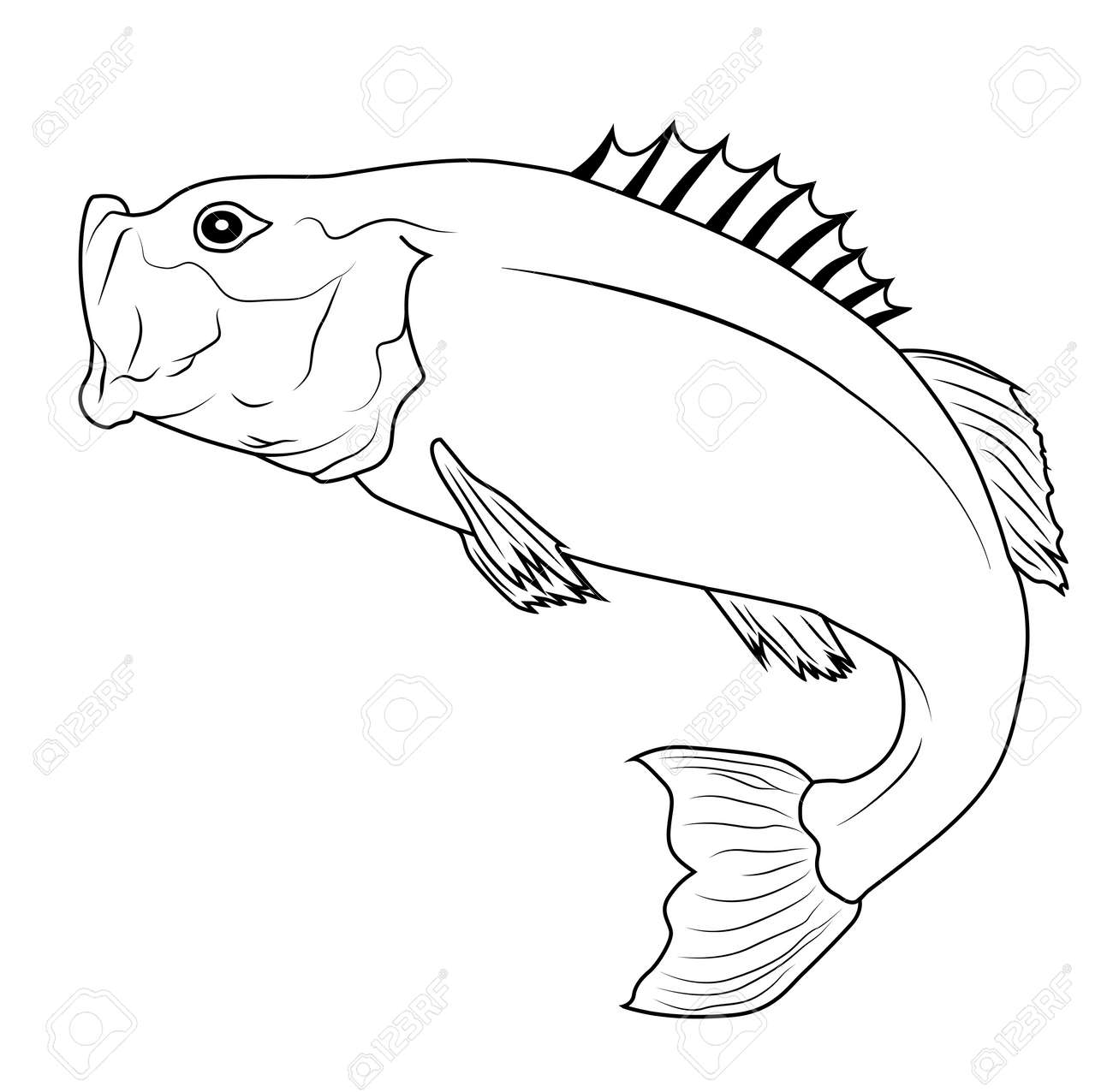 largemouth bass stock photos u0026 pictures royalty free largemouth