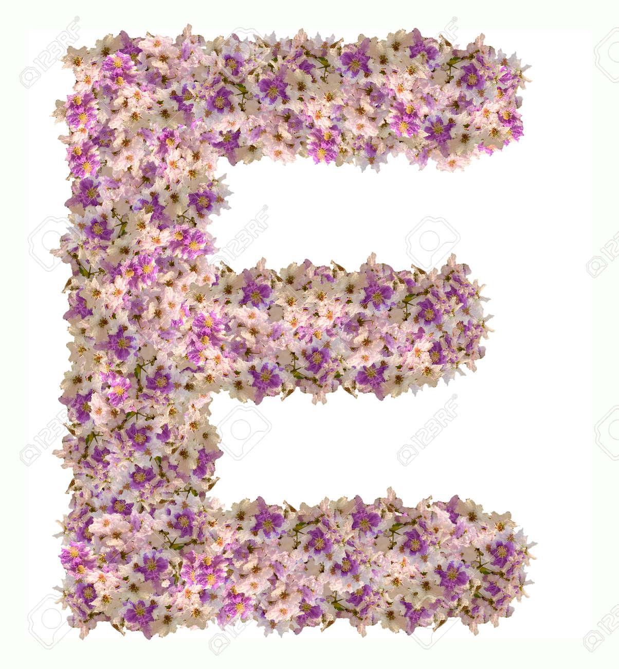 Letter e alphabet with zinnia flower abc concept type typography letter e alphabet with zinnia flower abc concept type typography design stock photo 65296094 altavistaventures Images