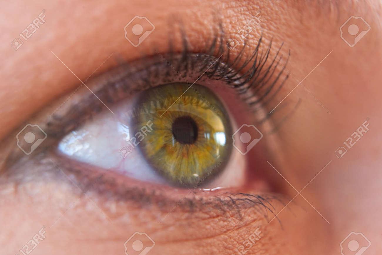 Yellow Natural eyes human pictures fotos
