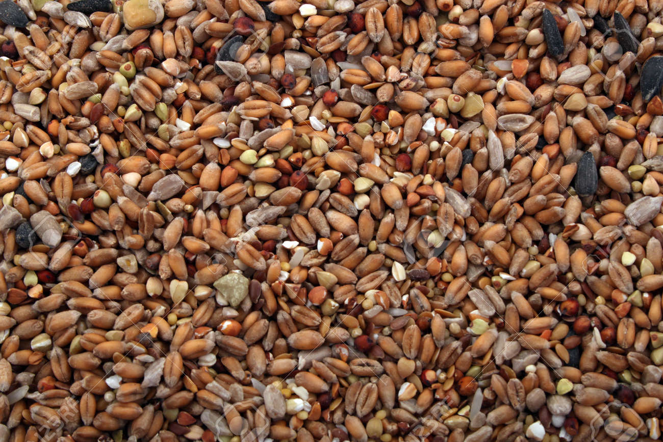 wild bird food put out in a garden to feed wild birds in the