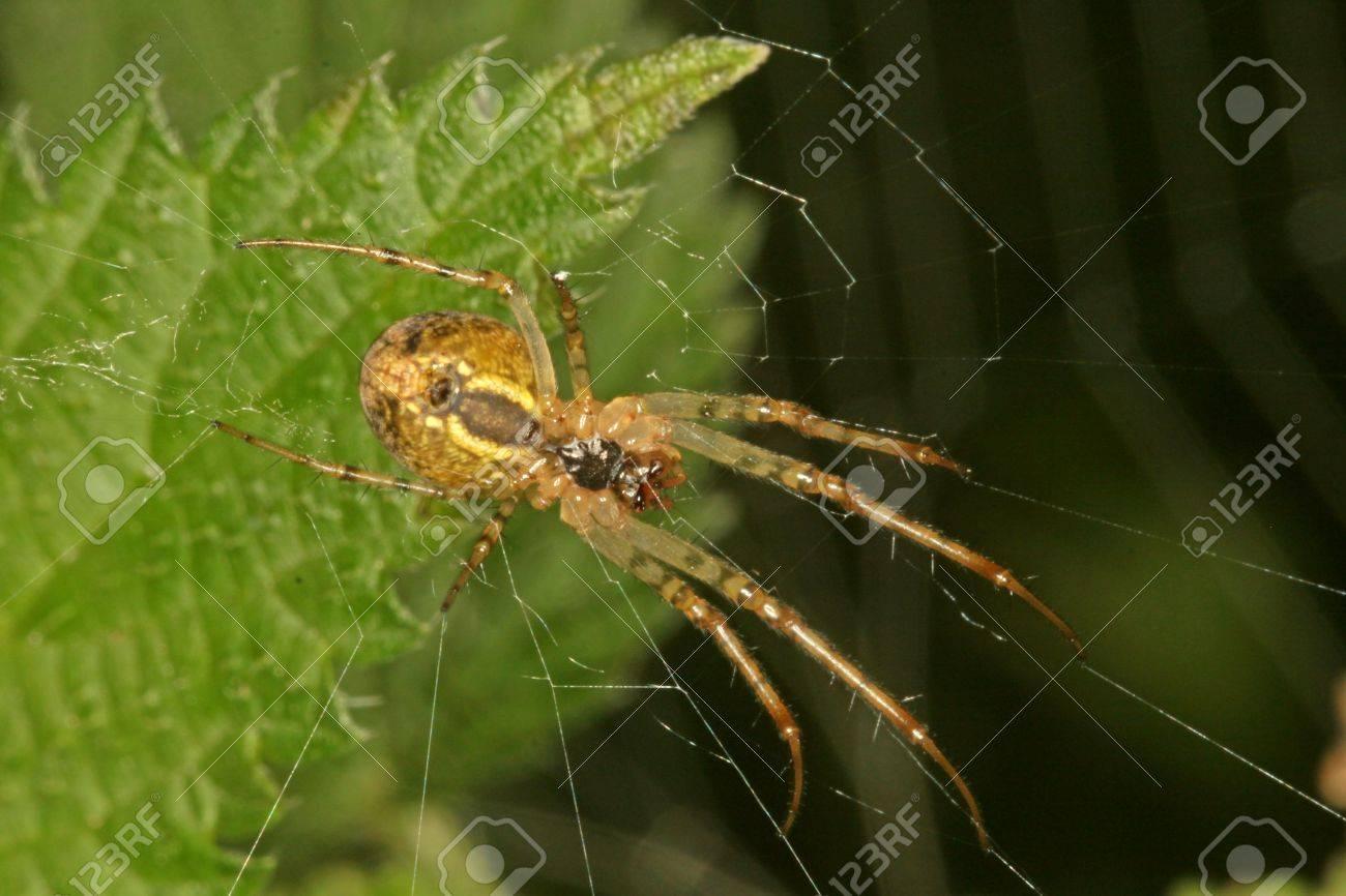 Encantador Cómo Hacer Las Uñas Web De Araña Viñeta - Ideas Para ...