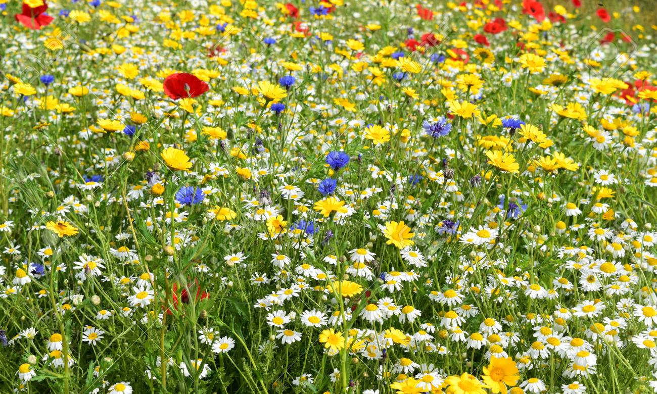 Summer flowers with bees, hoverflies and other insects Stock Photo - 84926864