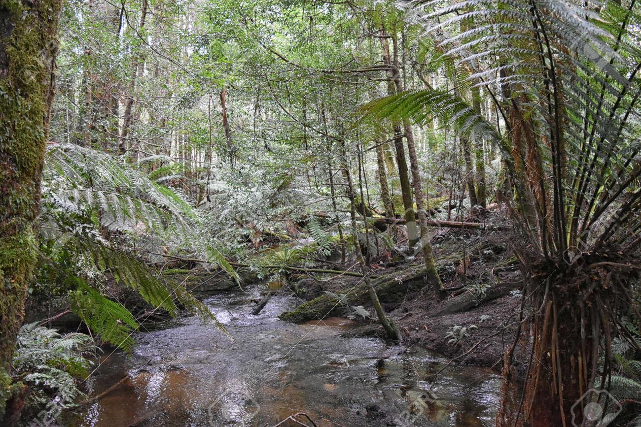 Cumberland Creek, Victoria Australia. Taken from Cumberland creek bridge, facing downstream. Temperate rainforest containing gums and tree ferns. Stock Photo - 92747736