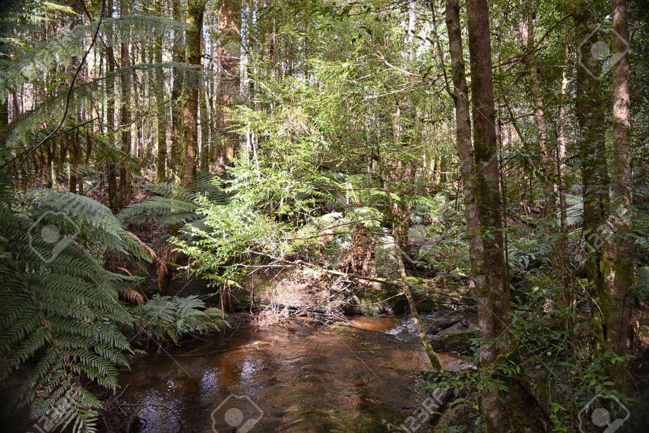 Cumberland Creek, Victoria Australia. Taken from Cumberland creek bridge, facing upstream. Temperate rainforest containing gums and tree ferns. Stock Photo - 92747737