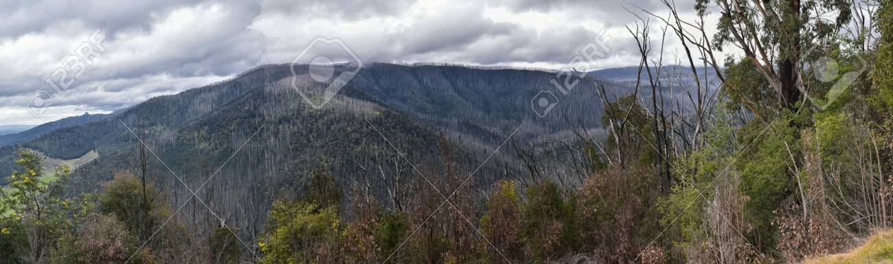 A panorama taken from Nicholl Lookout, Marysville, Victoria. The view shows  dead trees over an approximate 90 degree arc and gives an idea of the extent of the 2009 bush fire. Stock Photo - 92985504