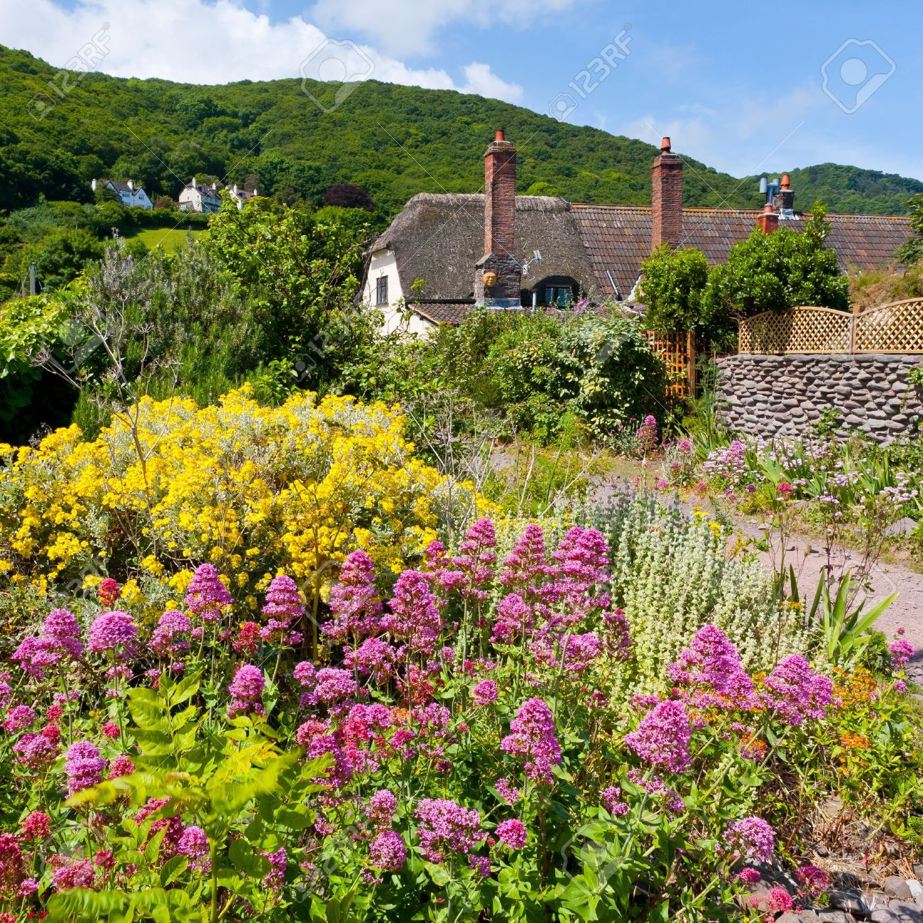 Wildflowers and cottages on the beach at Porlock Weir, Somerset England UK Stock Photo - 13212446