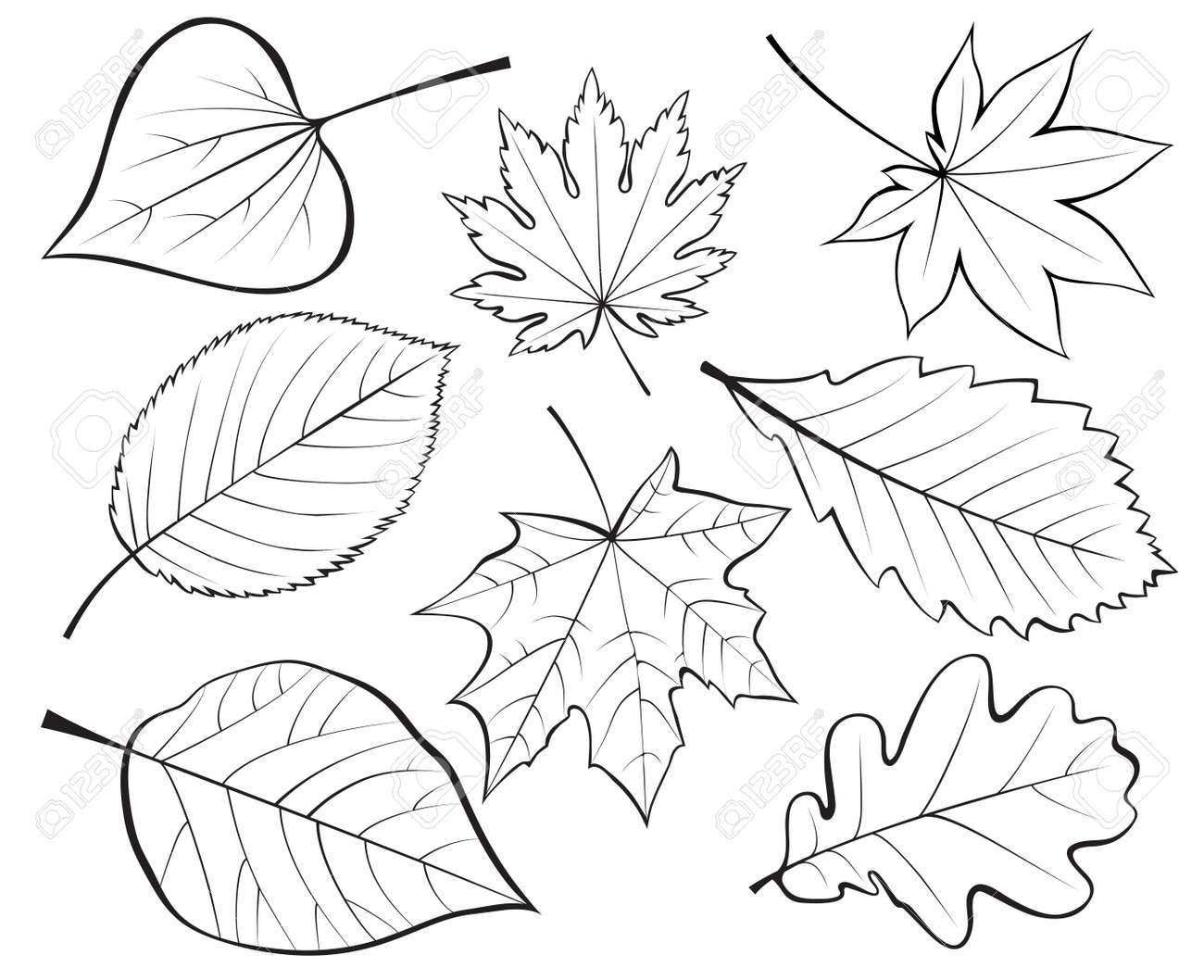 Uncategorized Leaves To Draw p contour line leafs 3 5 lessons tes teach set of leaves drawing royalty free cliparts vectors and