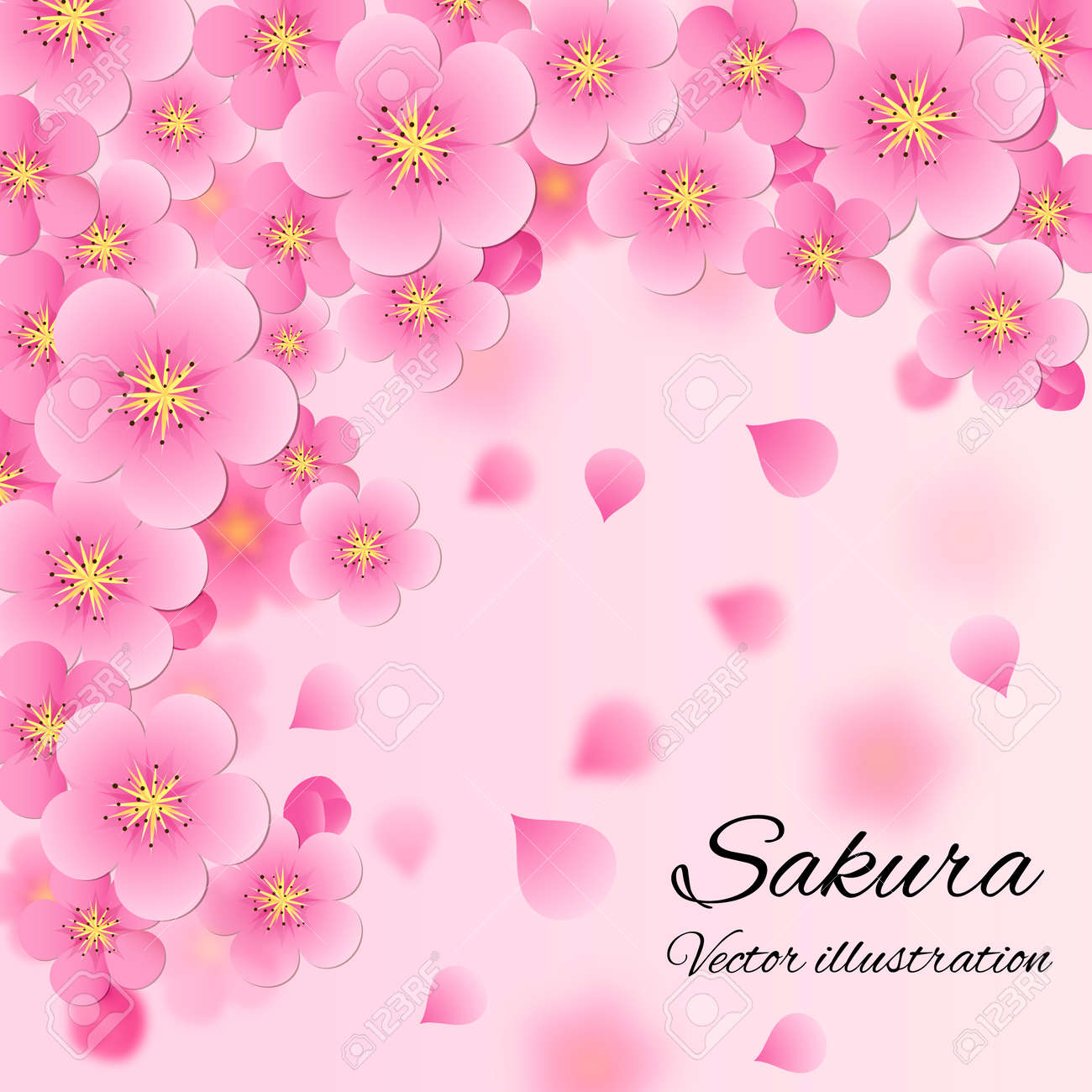 Elegant Soft Pink Color Cherry Flowers Sakura Background Royalty