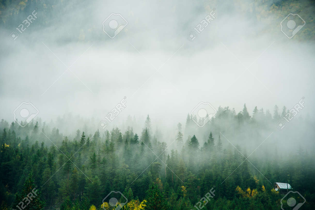 Misty landscape with spruce forest in hipster vintage retro style. - 169729336