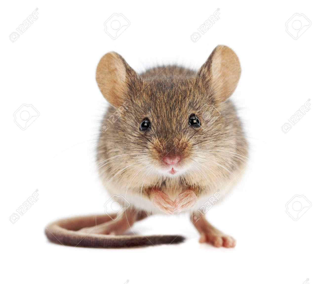 Como Atrapar Ratones En Casa. Awesome Como Atrapar Ratones En Casa ...