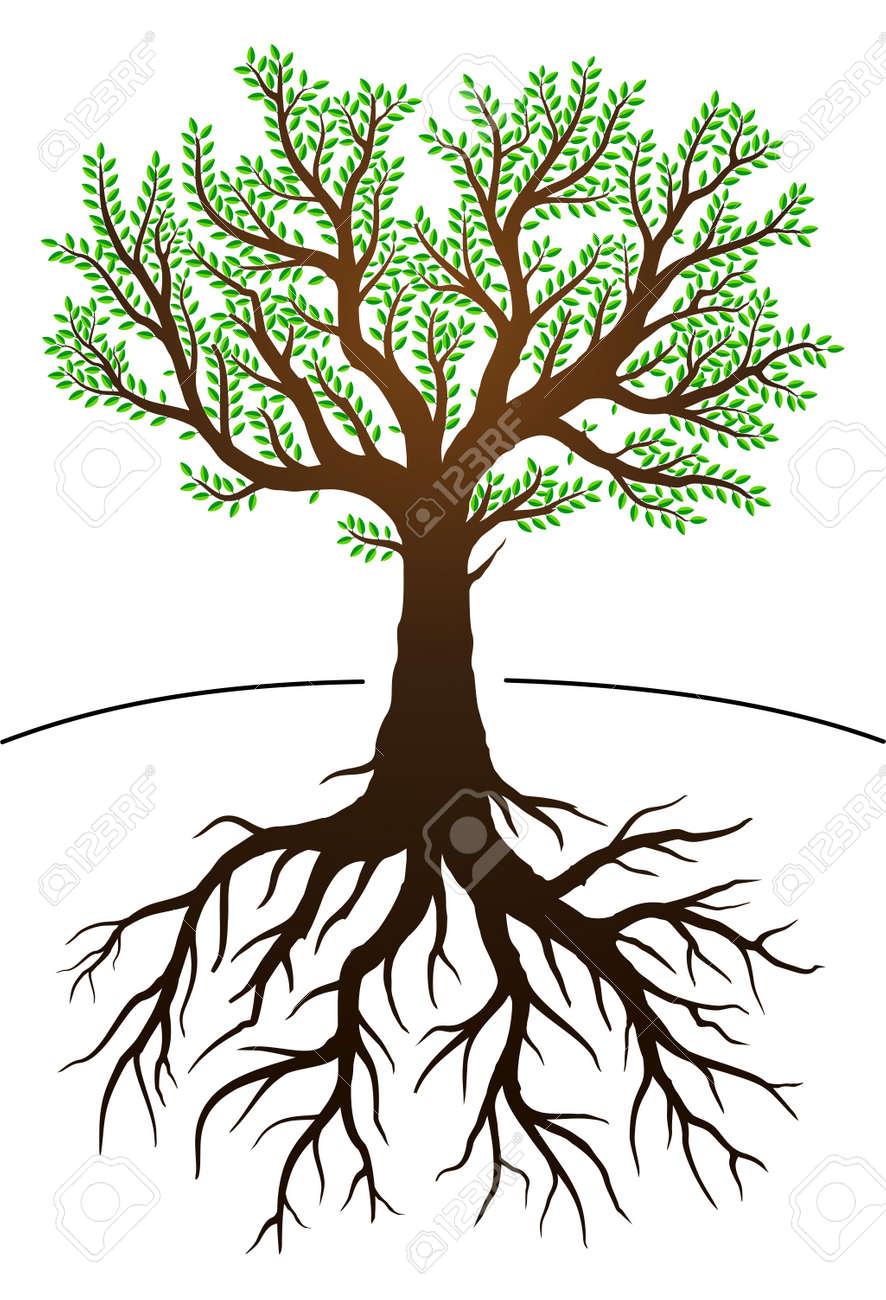 ilustración del árbol con hojas verdes y raíces ilustraciones
