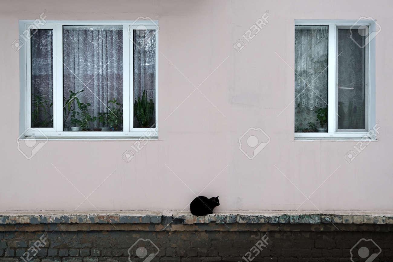 Black cat Stock Photo - 17453025