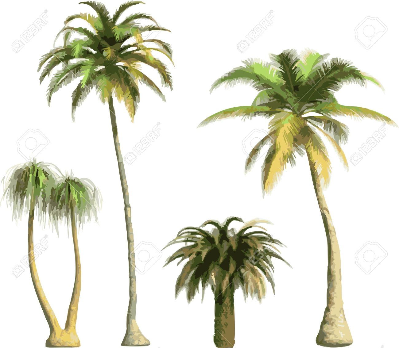 color Palms Stock Vector - 7334380