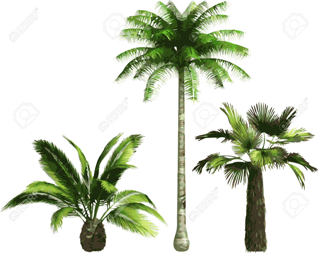 Color Palms Royalty Free Cliparts, Vectors, And Stock Illustration ...