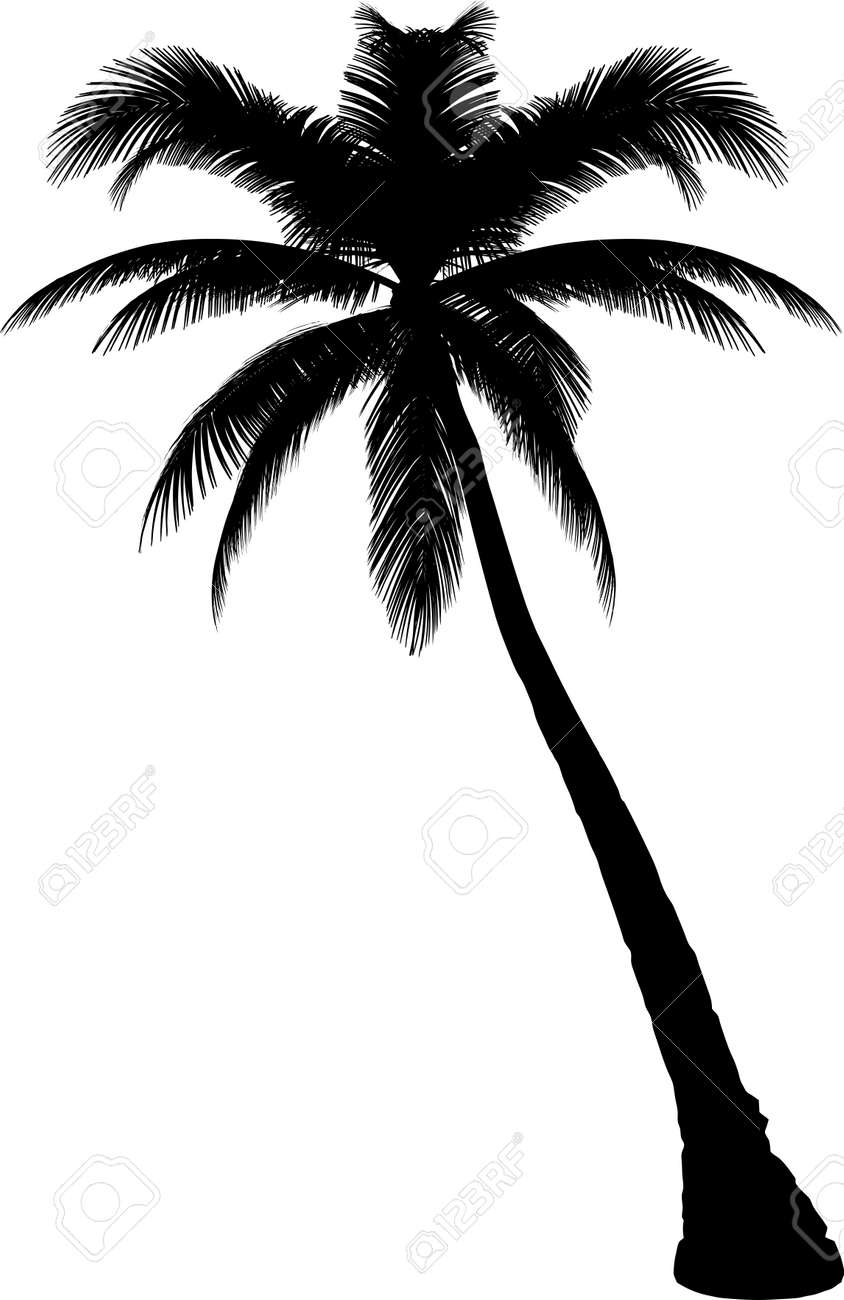 tree royalty free cliparts vectors and stock illustration image rh 123rf com clip art palm tree vector free download palm tree clip art free black white