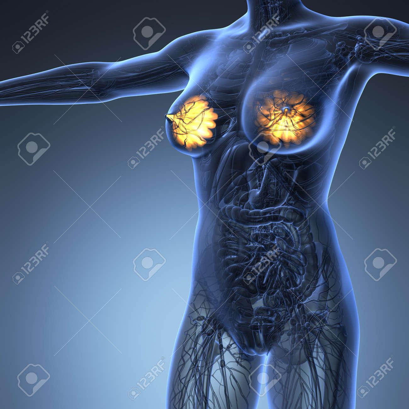Wissenschaft Anatomie Des Menschlichen Körpers In X-ray Mit Glühen ...