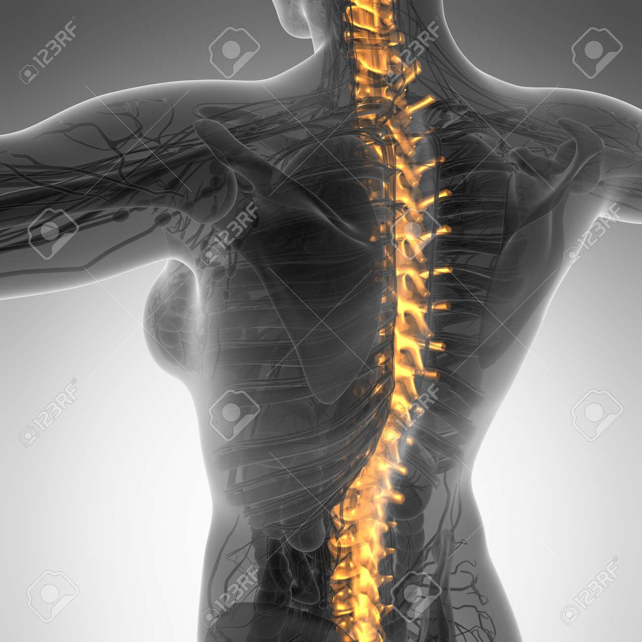 Menschliche Rückenschmerzen Und Rückenschmerzen Mit Einer Oberkörper ...