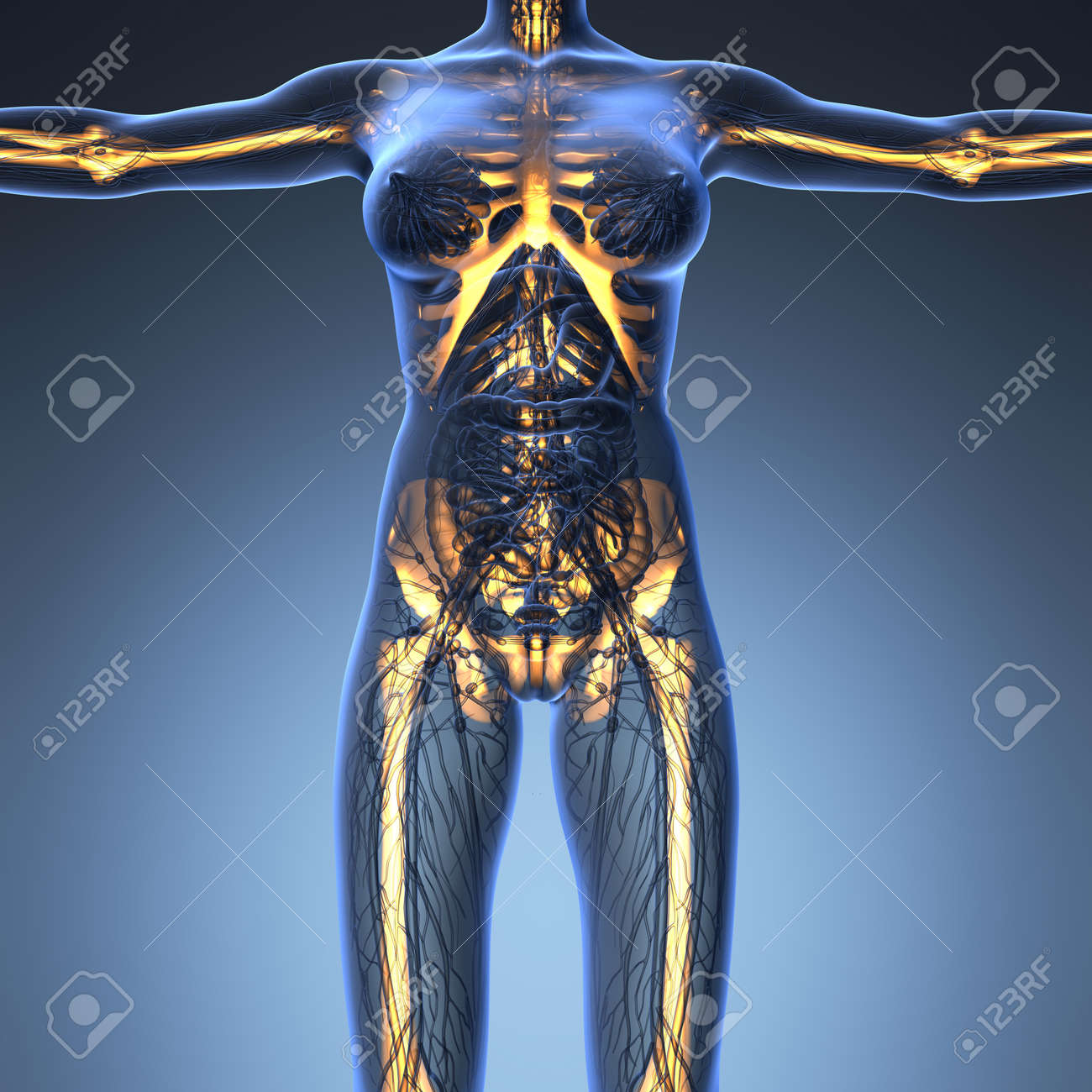 Science Anatomy Of Human Body In X Ray With Glow Skeleton Bones