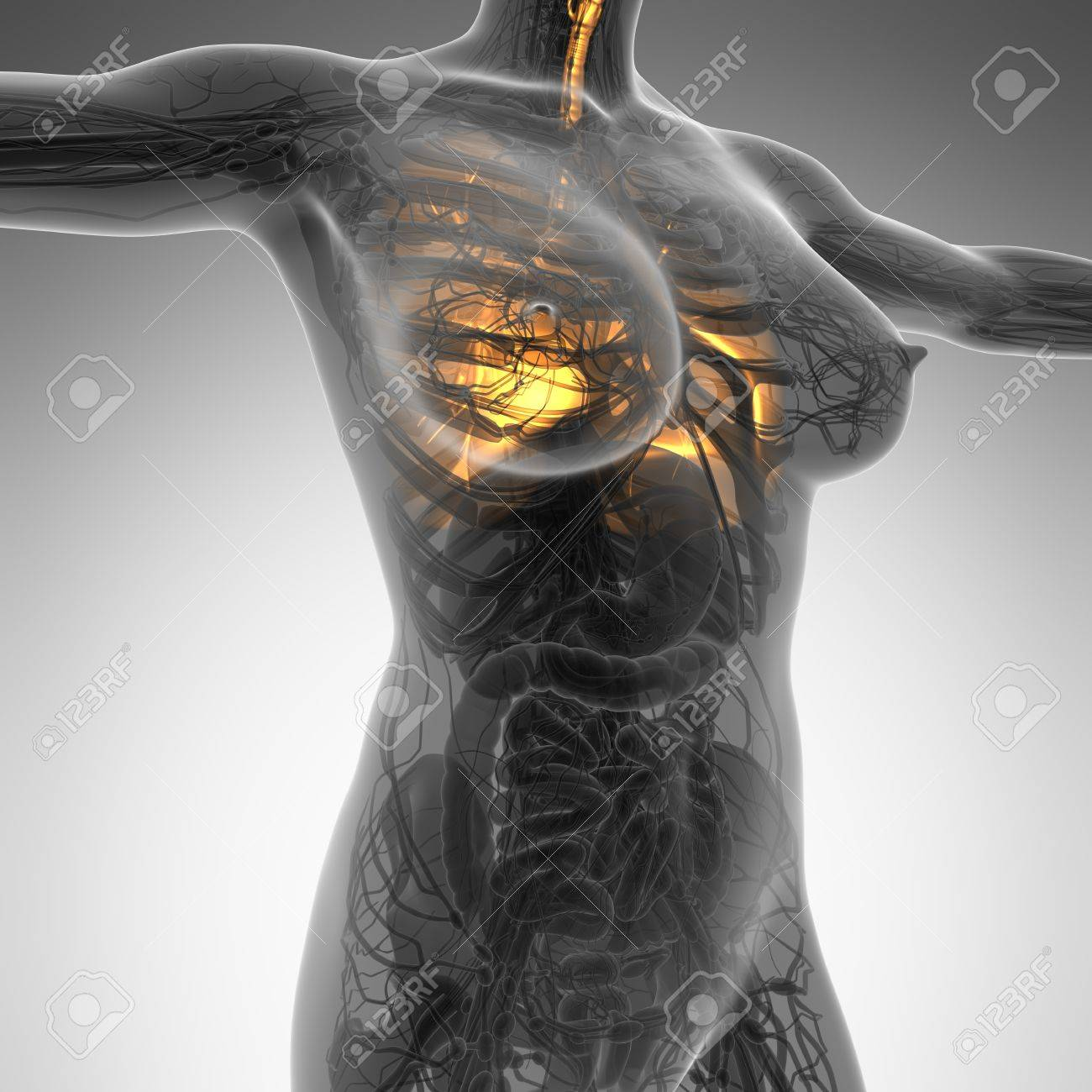 Science Anatomy Of Woman Body With Glow Lungs Stock Photo Picture
